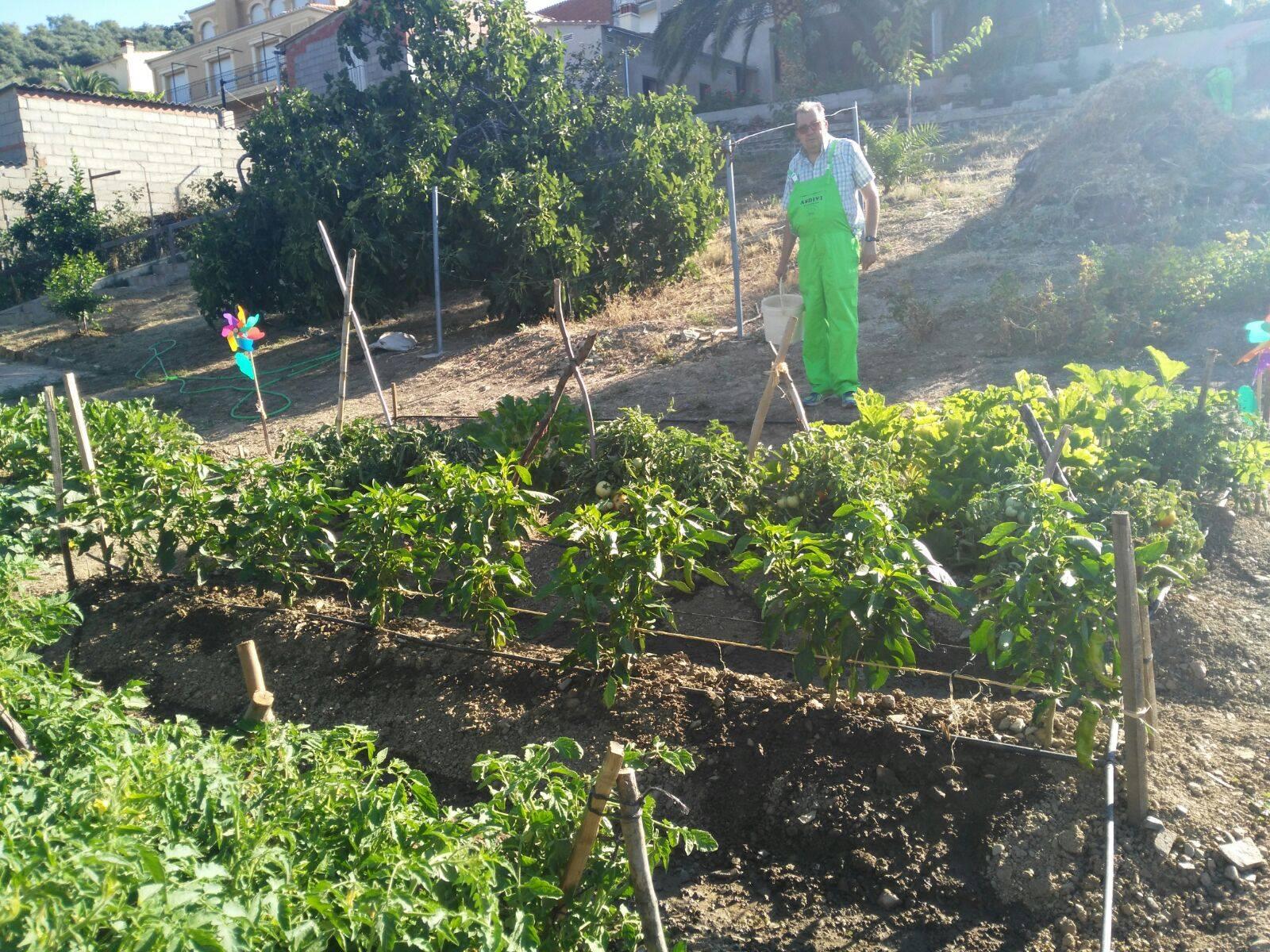 Recogiendo la cosecha 1