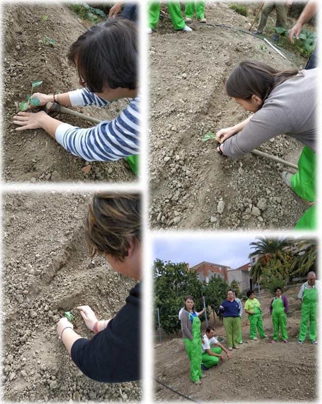 Plantación de verduras octubre 2018