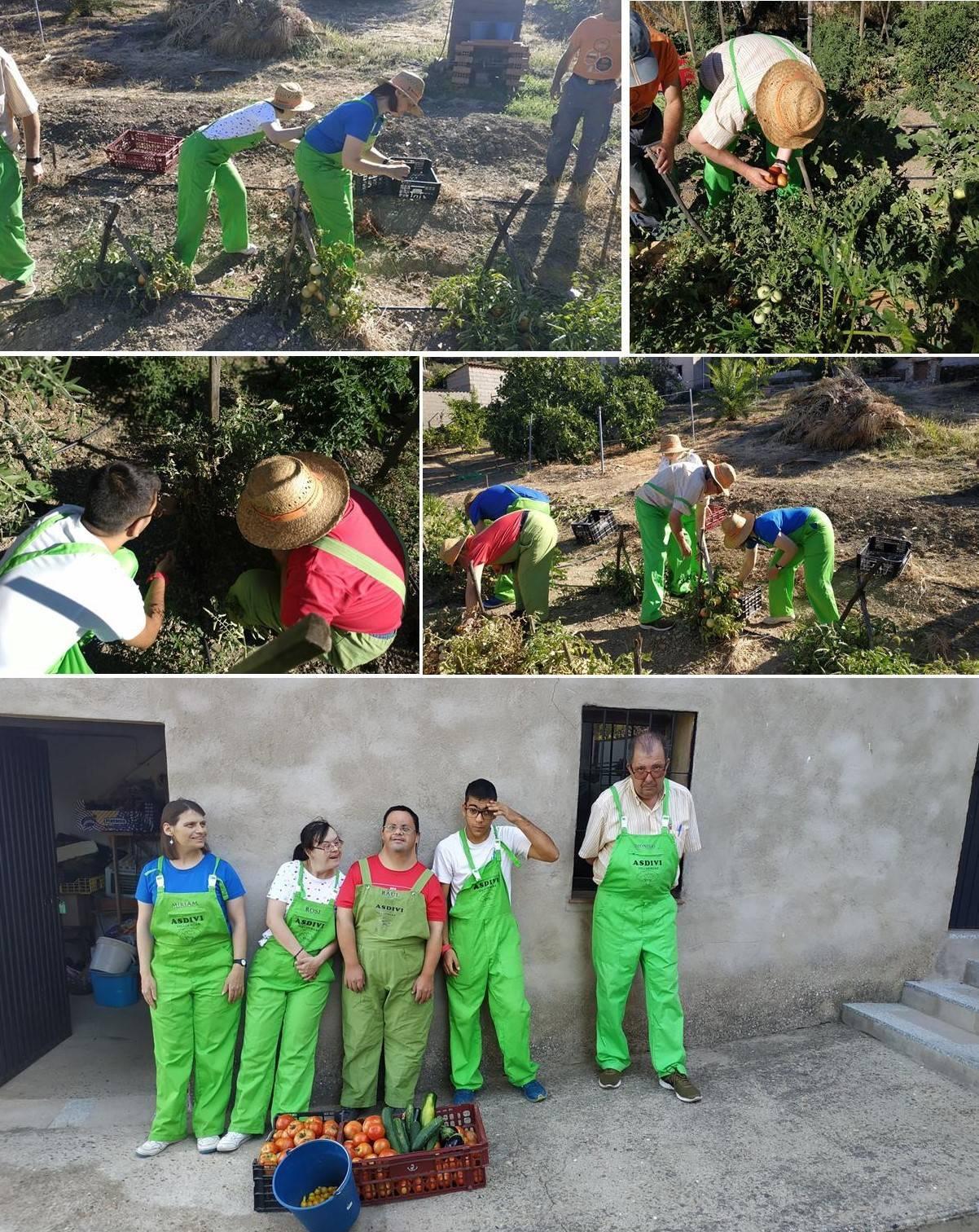 Recogida de las verduras huerto julio 2019